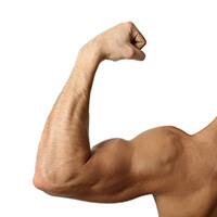 Stimulate New Muscle Growth